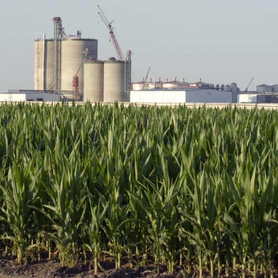 A cornfield in front of an ethanol plant.