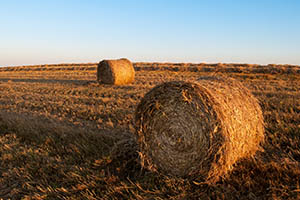 Photo of a a hay bale